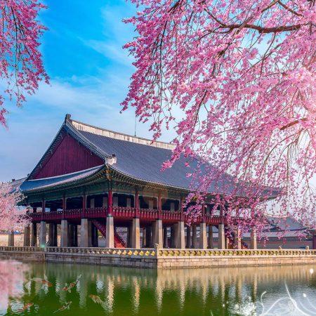 Lợi ích khi đi Du học Hàn Quốc tại Seoul